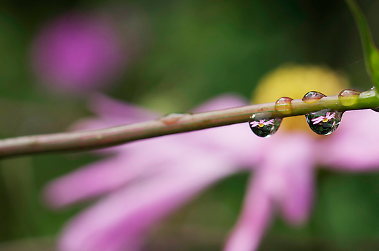 good morning dew drops by Clare Colins