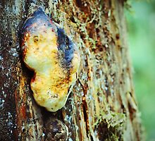 Strange Fungus by BPhotographer