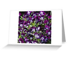 Violas in the garden Greeting Card