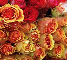 Roses by Tamarra