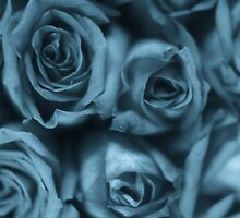 Roses-Series 4 by Tamarra