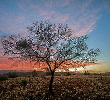 Outback Sunset (ED2) by Ray Warren