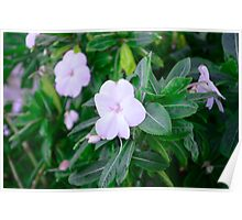 Flowers in Sitting Poster