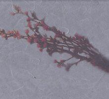 flower of cherry tree by yukaglenn