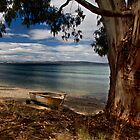 Beachside gum - Middleton, Tasmania by clickedbynic