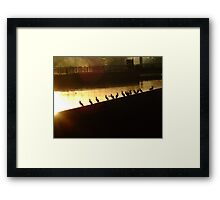 Getting All Your Ducks In A Row Framed Print