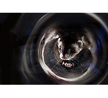 Ferret Reflection 2 Photographic Print