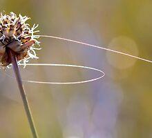 Into the breeze by Jocelyn  Parry-Jones