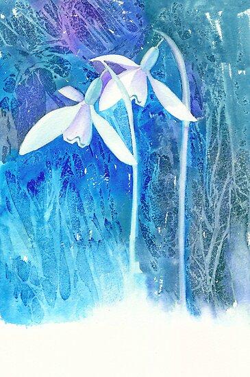 Snowdrop arrival! by Jacki Stokes