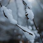 Snow on Branch by AmandaFoss87