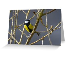 Great Tit - Parus Major Greeting Card