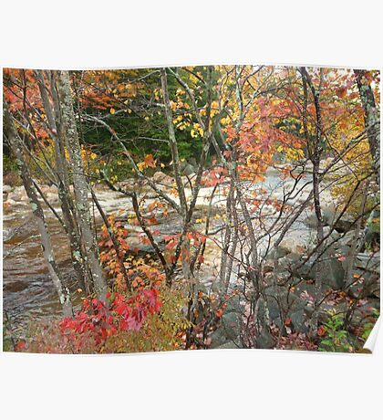 Swift River through a maple screen Poster