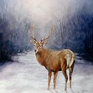 Follow me.-Red stag by Pauline Sharp