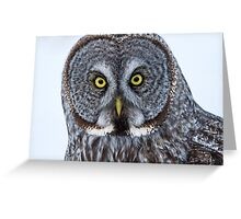 Great Gray Owl Portrait Greeting Card