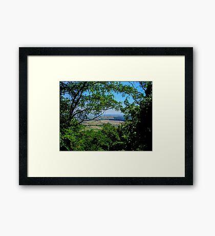 Through the Leaves Framed Print