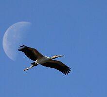 Elegance in Flight by Carol Bailey White