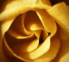 NOVEMBER ROSE by Colleen2012