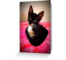 Mishu inside a tissue box Greeting Card