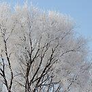 Hoar Frost by Guy Jenkins