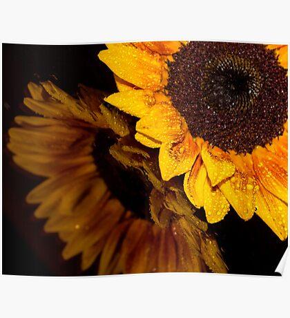 Sunflower 5 Poster