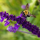 Bee 2 by John Velocci