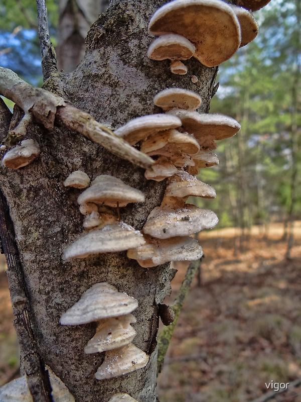 fungus folly by vigor