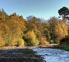 Late Afternoon Along the Waihi River by Christine Smith