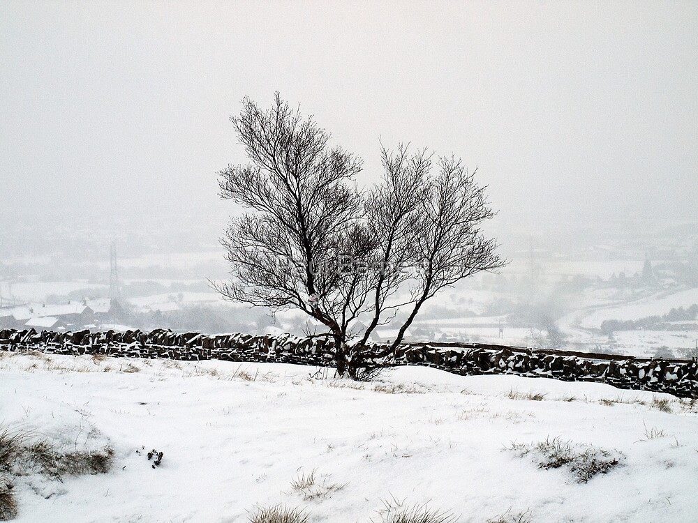 Lone Tree by Paul Barnett