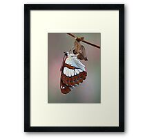 Limenitis reducta 2 Framed Print