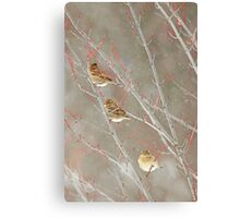 Three In A Tree ~ Canvas Print