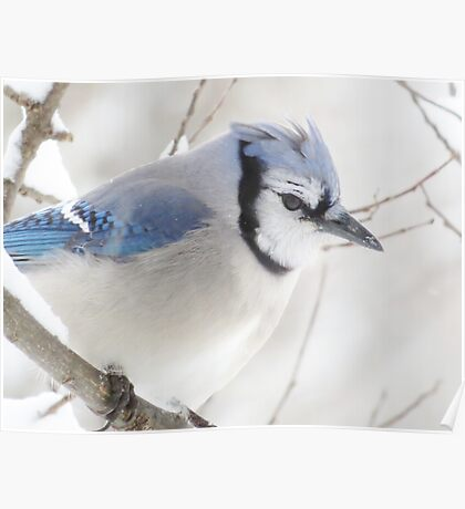 Not Another Blue Jay!!!! Poster