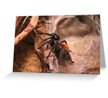 RED KNEE SPIDER  Greeting Card
