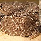 Rattler by CMCetra