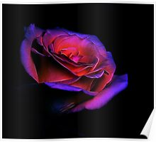 Fractalized manipulated Yellow Rose Poster