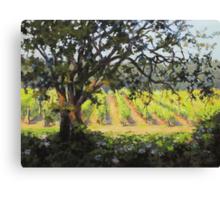 Vineyard's Edge Canvas Print