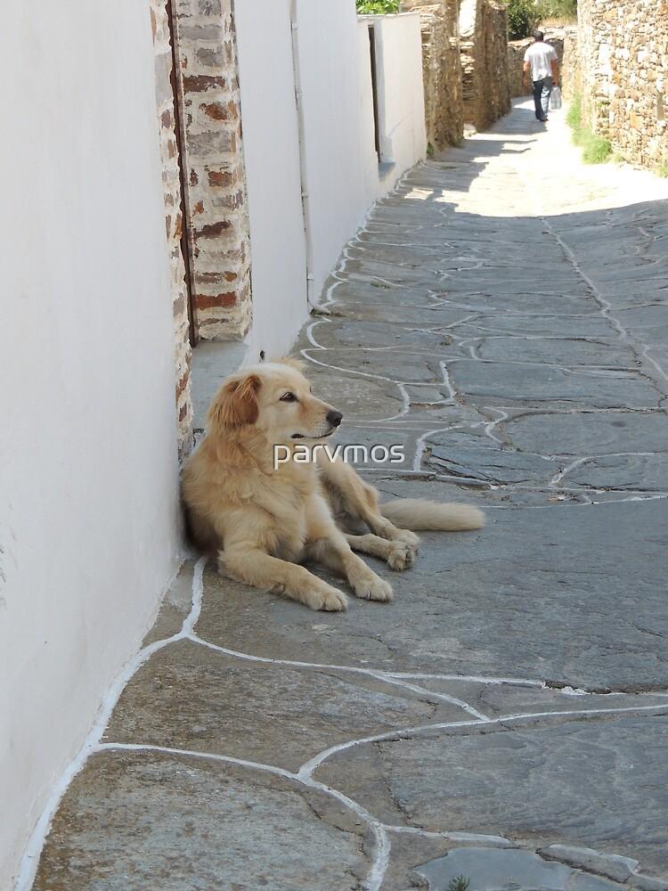 Dog resting by parvmos