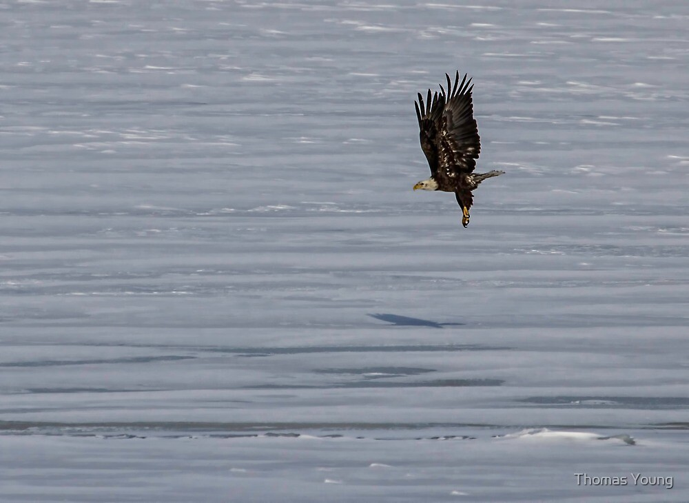 Lifting Off the Ice by Thomas Young
