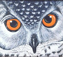 Owl- I'm watching you by Joanna Evans