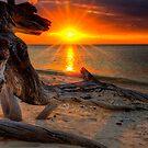 Hidden Dragon ... by Gary  Davey (Jordy)
