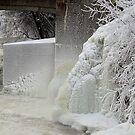 Winter beauty by Jeannine St-Amour