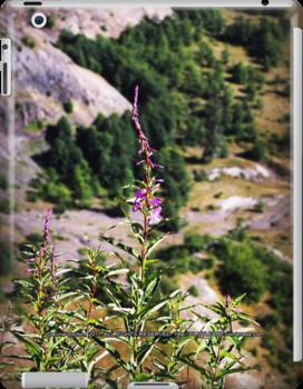 wildflowers over cliff edge Johnston's Ridge by Dawna Morton