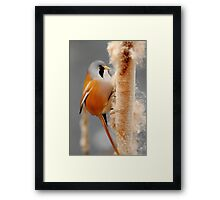On The Winter Forage Framed Print