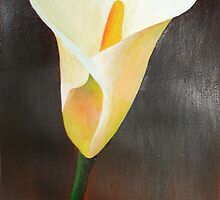 Cream Calla Lily by taiche