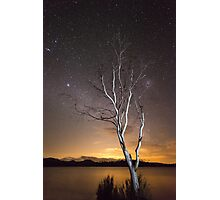 """Can't see the Forest for the Tree"" ∞ Lake Somerset, QLD - Australia Photographic Print"