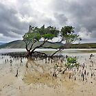 Mangrove Tree by Peter Doré