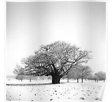 Ancient Oak, Richmond Park, England Poster