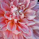 Shadows on a dahlia....shadow on the sun by jammingene