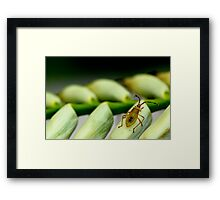 Insect on a Bromeliad Flower Framed Print