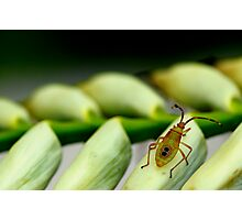 Insect on a Bromeliad Flower Photographic Print