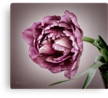 Peony Tulip Canvas Print